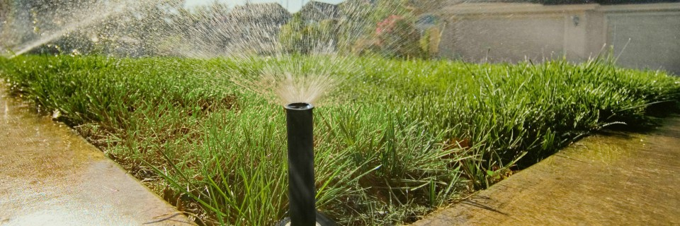 Houston's Leading 
