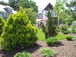 houston-landscaping-irrigation-trees-shrubs