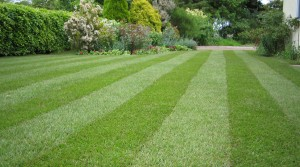 mow-grass-lawn-tips