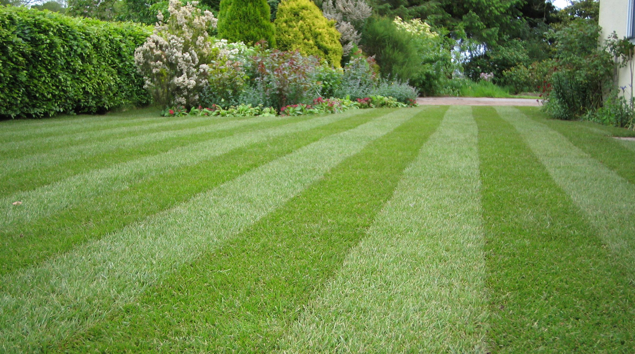 Lawn Maintenance Tips to Help Save Irrigation Water